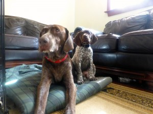 """The two dogs I """"mother"""" today, 14 year-old Number Nine & puppy Apollo"""